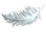 white-feather-transparent-png