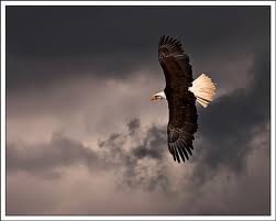 EagleFlyingAboveTheStorm