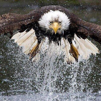 EagleUpFromTheWater