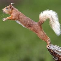 Squirrel Medicine - Resurrecting the Spirit Child