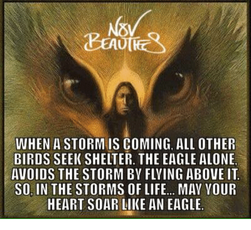 when-a-storm-is-coming-all-other-birds-seek-shelter-27154719