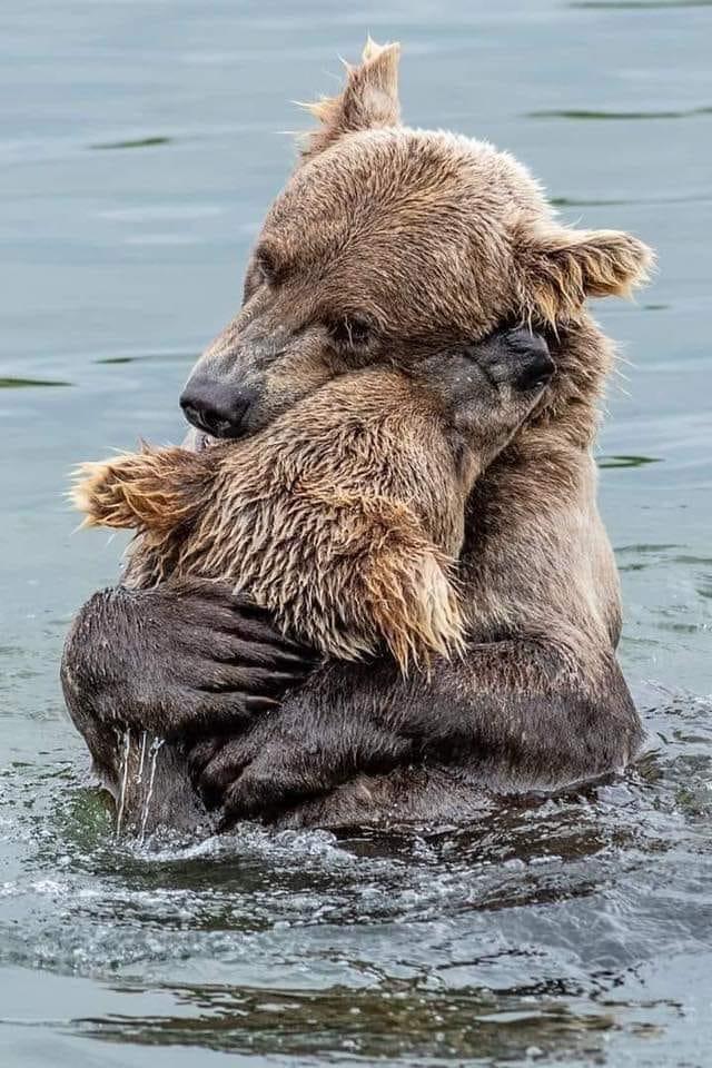 BearHugs