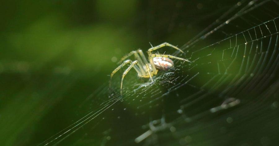 SpiderLawAttraction2