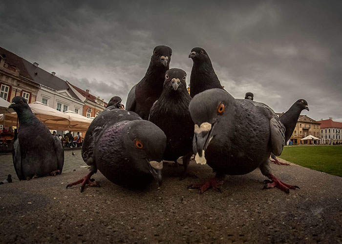 Hip Hop Pigeons
