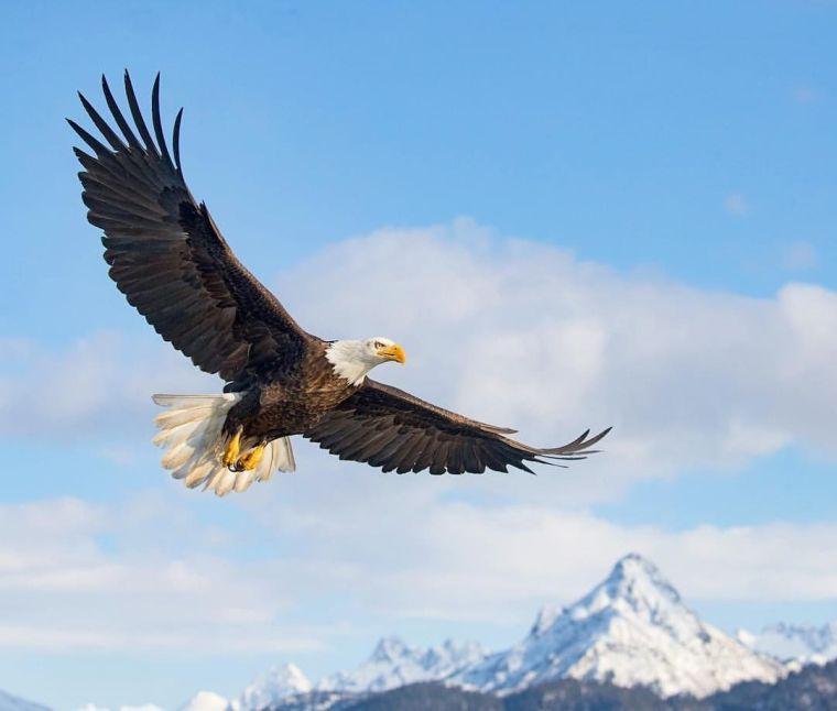 Cloud Spencer Eagle Bear Spirit Dance Eagle