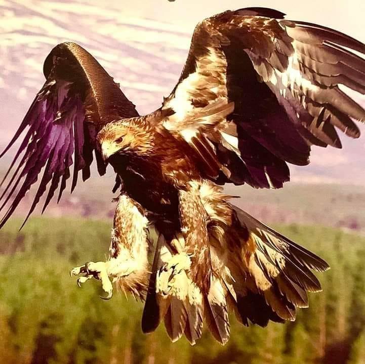 Cloud Spencer Eaglebear Breath