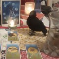 Hummingbird Medicine Card Reading (2)