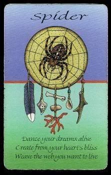 Spider Medicine Card