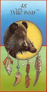 Wild Boar Medicine Card