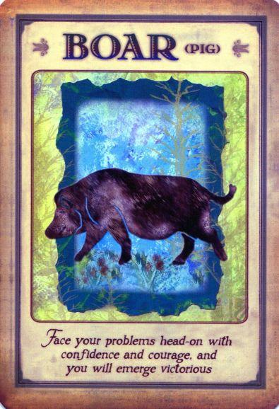 Wild Boar Medicine