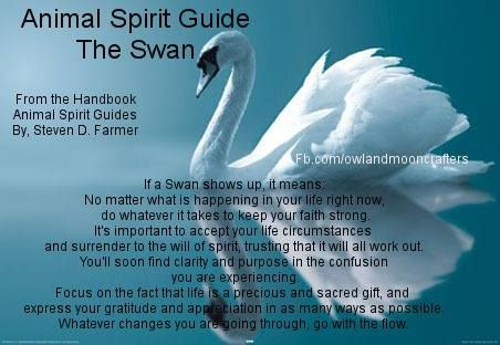 Swan Message