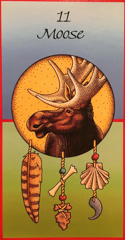Moose Medicine Card