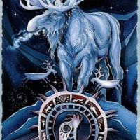 Moose Medicine - Endurance, Dignity, and Motivation