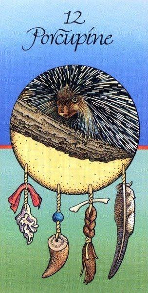 Porcupine Medicine Card