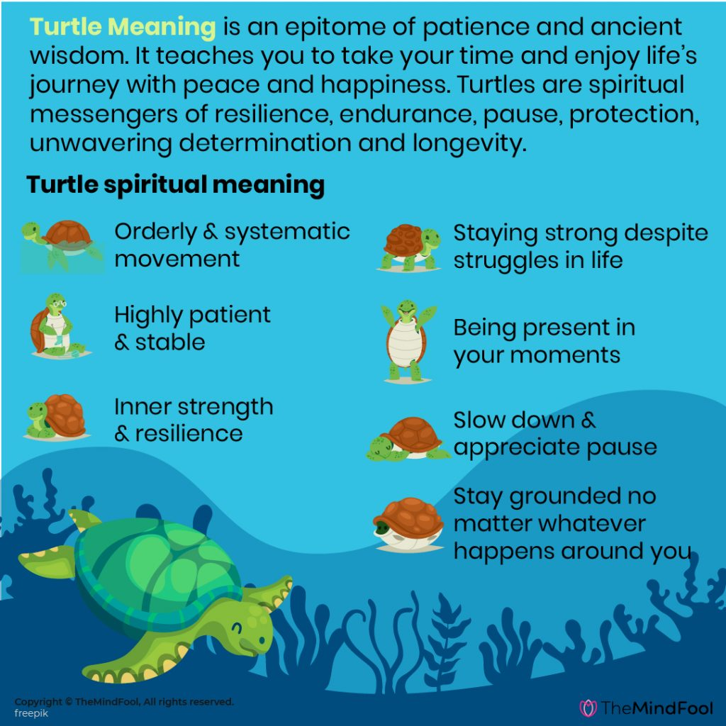turtle-meaning-05-1024x1024