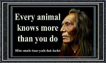 Every animal knows more than you