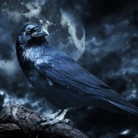 Raven Medicine - Lifting the Veil, Sounding the Trumpets - The Great Awakening has Begun!