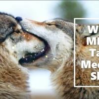 Wolf's MEME-Tastic Medicine Show