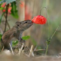 """Mouse Medicine - The Power of """"As If"""""""