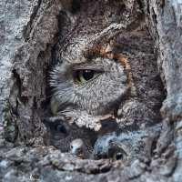 "Owl Medicine - Are you Awake? Or just ""Woke?"""