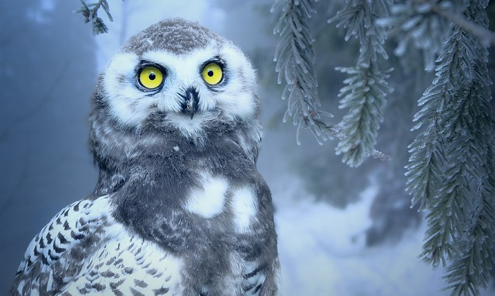 Owl-Meaning-in-the-Bible