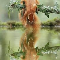 Mirror Squirrel