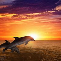 Dolphin Medicine: Good Tidings for the Remnant