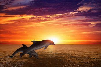 Dolphin-Spirit-Animal-2
